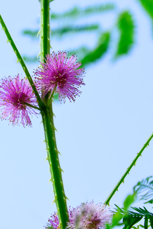 Grass flower see no value But carries a natural beauty.