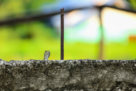 A lizard hides behind a wall of mortar, just poking its head out.