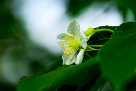 When flowers bloom, it reveals the hidden pollen.