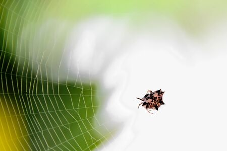 Spider waiting for prey to feed on its fiber. Stock Photo