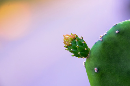Cactus flowers are different colors, the base of the flower still looks the same color.