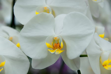 Orchids with expanded petals resemble birds that are flying.