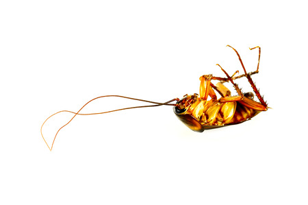Cockroaches are the insects that bring germs to people easily because it sneaks into the cooking equipment or even the food we cook
