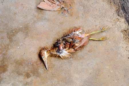 Dead birds have been eaten by some animals until their wings and some flesh disappear until they can see their internal organs.