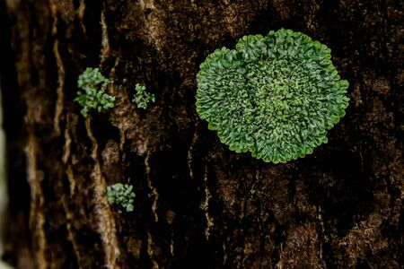 Lichens will grow up, where they must have very high humidity or near clean water sources.