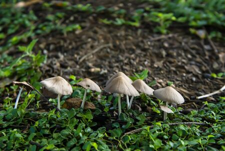 Mushrooms are plants that can grow in areas with relatively humid and cool weather.