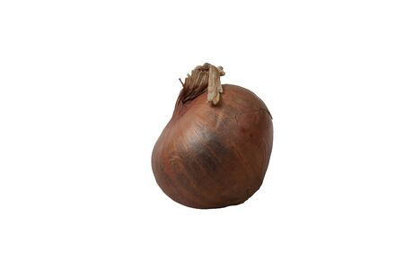 Onion is a vegetable that has a very strong smell and can be used to make a variety of dishes. Stock Photo