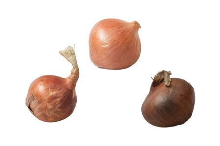 Onion is a vegetable that has a very strong smell and can be used to make a variety of dishes.