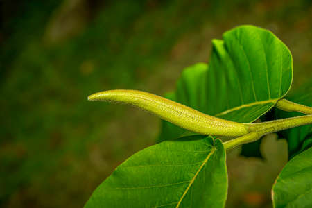 The new leaves of the tree plant are closed, but as they grow they are opened.