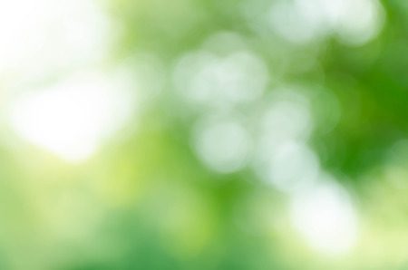 Green bokeh out of focus background from nature forest Foto de archivo