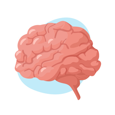 Brain icon. Human internal organs. Vector illustration Illustration