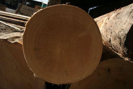 logging railways: timber