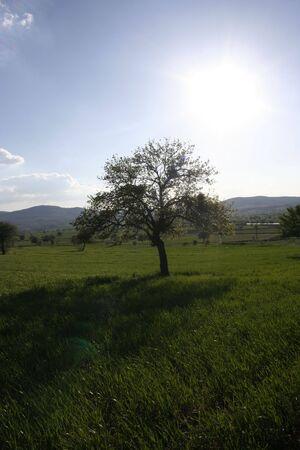 innate: albero