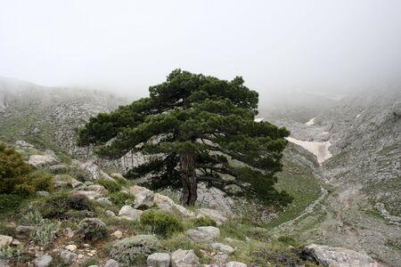 innuendo: tree
