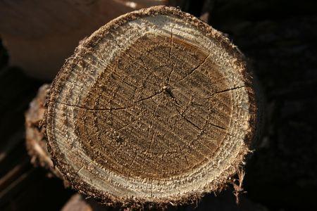 logging railroads: legno