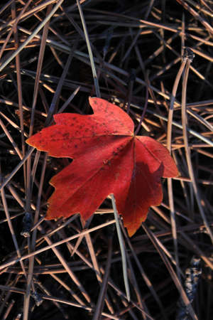 autumn leaves Stock Photo - 8645457