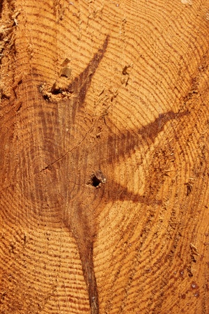 wood Stock Photo - 9291748
