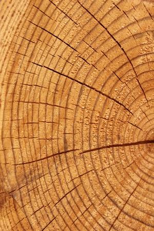 wood photo