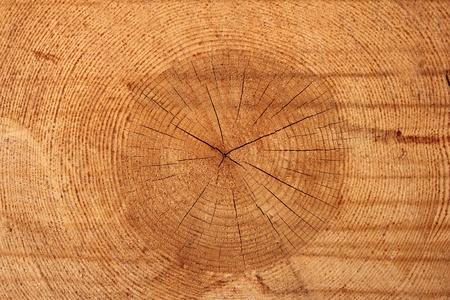 tree Stock Photo - 9590223