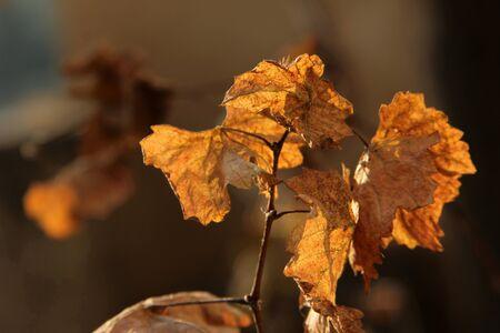 leaf Stock Photo - 13112305