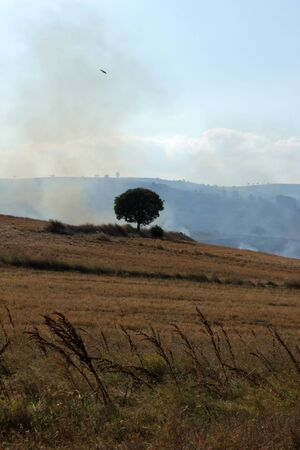 stubble burning photo