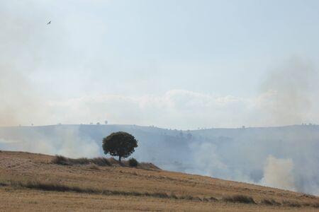 stubble burning Stock Photo - 13636586