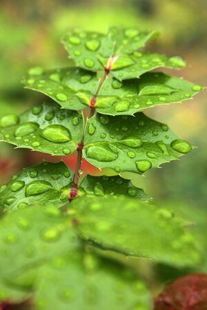 bush to grow up: leaf Stock Photo