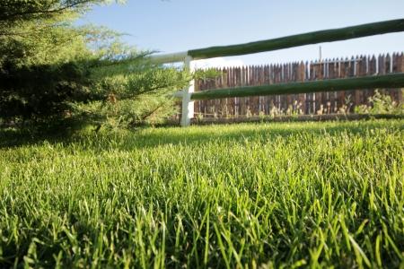 stockade: Grass Stock Photo