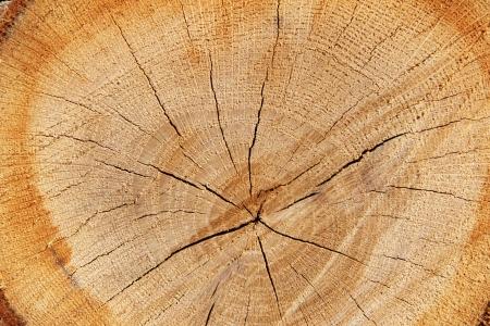 floor coverings: Log