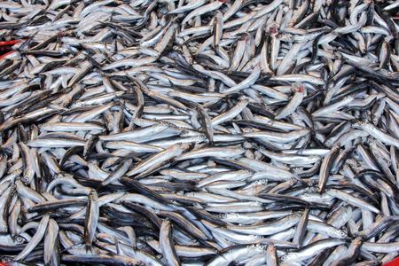 engraulis: Fish Stock Photo