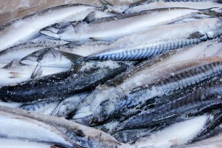 engraulis encrasicolus: Fish Stock Photo