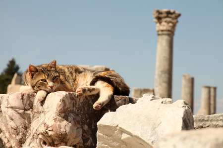 Cat resting Ephesus photo
