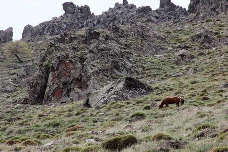 Wild Horse photo
