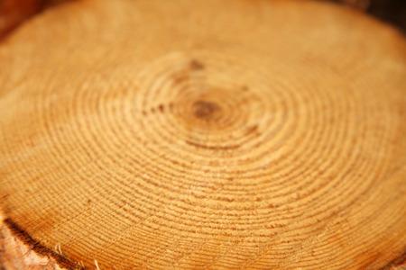 floor coverings: Tree