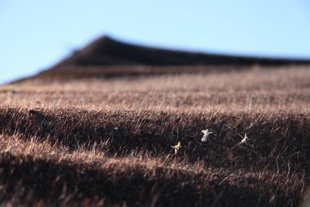 desierto: Tienda del n�mada