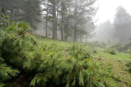 UOMO pioggia: Foresta