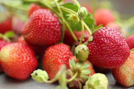organic plants: strawberry Stock Photo