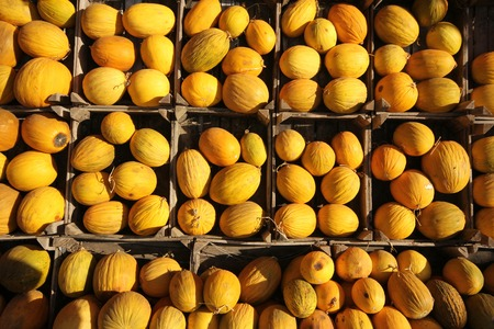 melons: organic melons Stock Photo