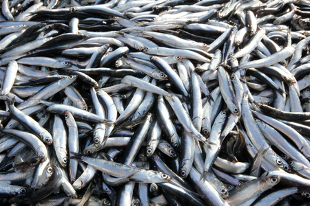 anchovy fish: Anchovy fish