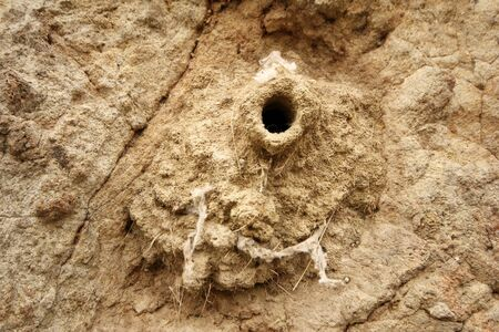 living things: Mud swallow nests