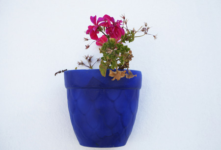 jade plant: Decorative and floral wall pot made of earth