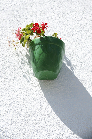 jade plant: Decorative and floral Wall pot made of earth Stock Photo