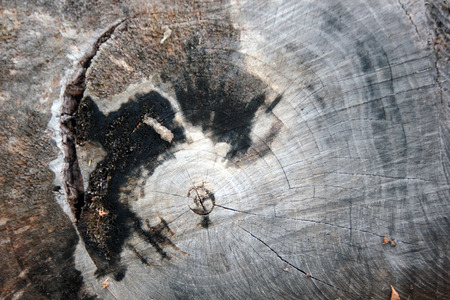 floor covering: Close-up of tree trunk