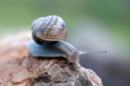Slug Standard-Bild