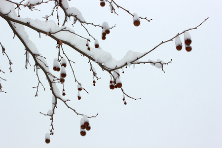 Tree background.