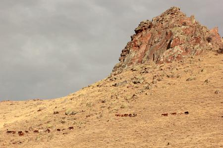 hoofed: Wild Horses Stock Photo