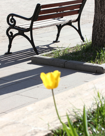 Park bench and yellow tulip Stock Photo