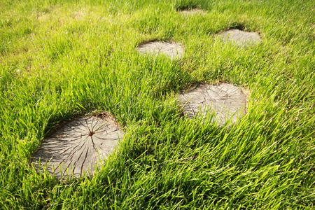 Tree stump on the green grass 版權商用圖片