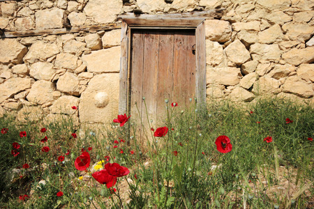 Wooden door and red poppies