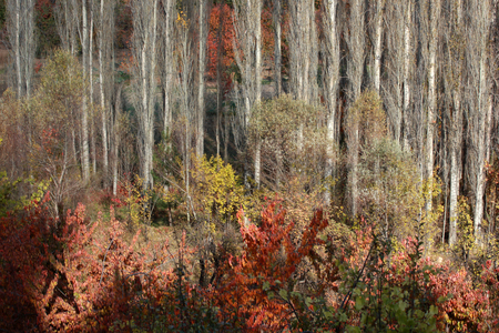 Abstract autumn background 写真素材